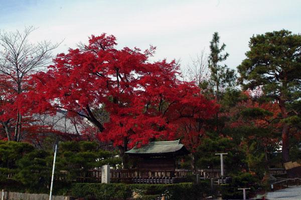 2011-11-27_2513.jpg