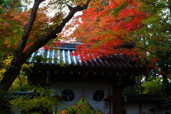 2011-11-27_2592.jpg