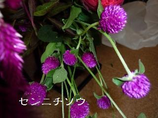 P1160671.jpg
