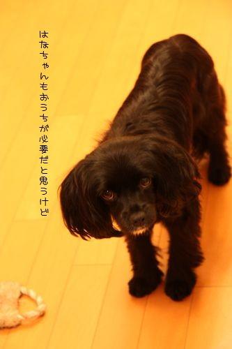 hana_091214_1.jpg