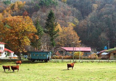 森と風のがっこうと短角牛