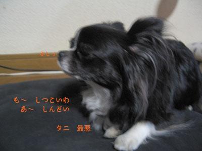 IMG_0119__.jpg