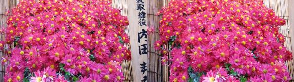 湯島天満宮菊の花?(交差法)
