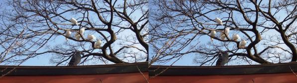 鶴岡八幡宮④(交差法)