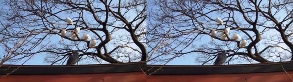 鶴岡八幡宮④(平行法)
