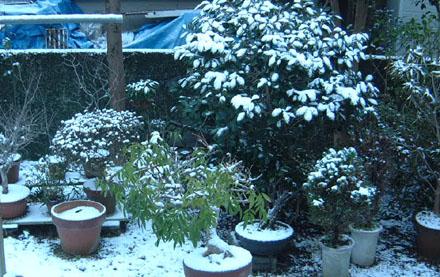 1222雪景色
