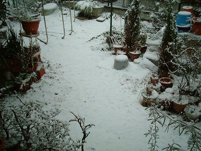 08/2/9 03 雪が積もりました