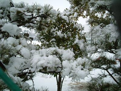 08/2/9 06 雪化粧した木