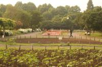 とある公園