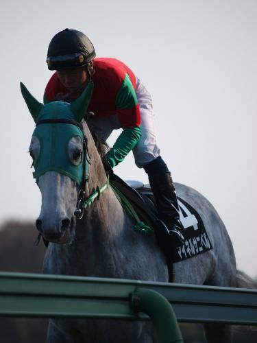 マイネルサニベル、返し馬