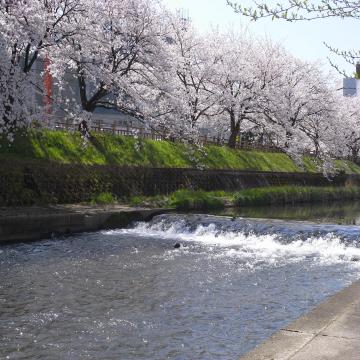 4.10.2009.名花 006