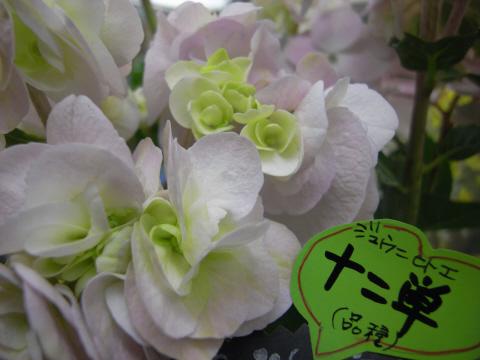 5.27.2009.名花 006