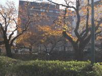 11.27.2009.名花 004