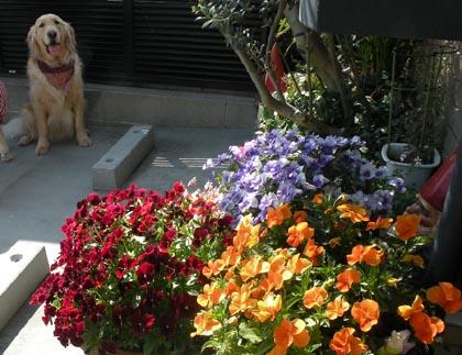 お花とStill