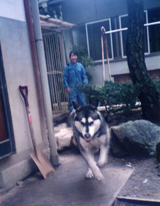 愛しの狼犬