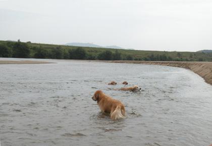 泳ぐみんなと途方にくれるマフィン