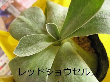 IMG_1359.jpg