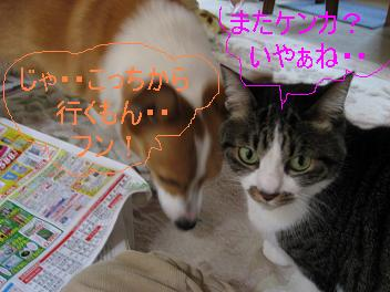IMG_1602.jpg