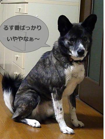 090217msashi.jpg