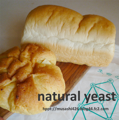 P1000126Snaturalyeast.jpg