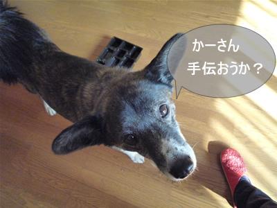 P1000952ymso-ji.jpg