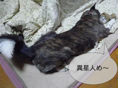 P1000989Ymusashi2.jpg