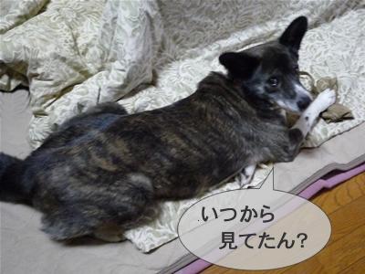 P1000990musashi3.jpg