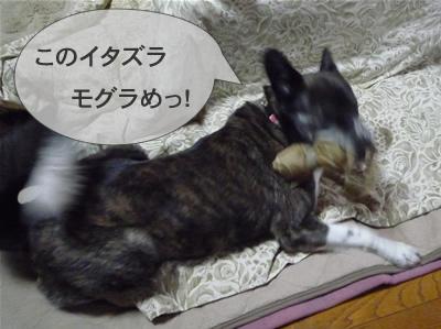 P1000991ymusashi4.jpg