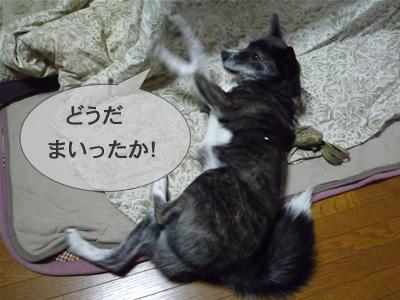 P1000999musashi7.jpg
