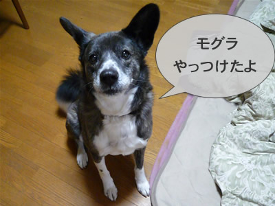 P1010020musashi8.jpg