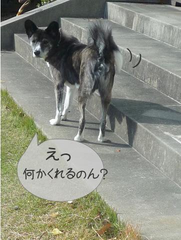 P1070885m4.jpg