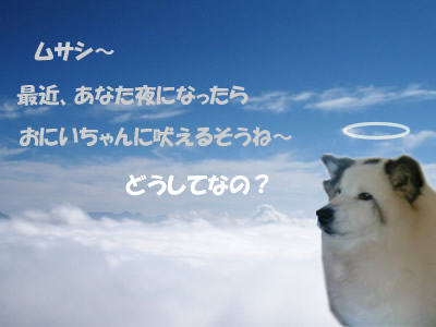 so_005ym3.jpg