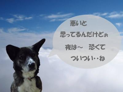 so_005ym4.jpg