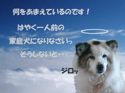 so_005ym5.jpg
