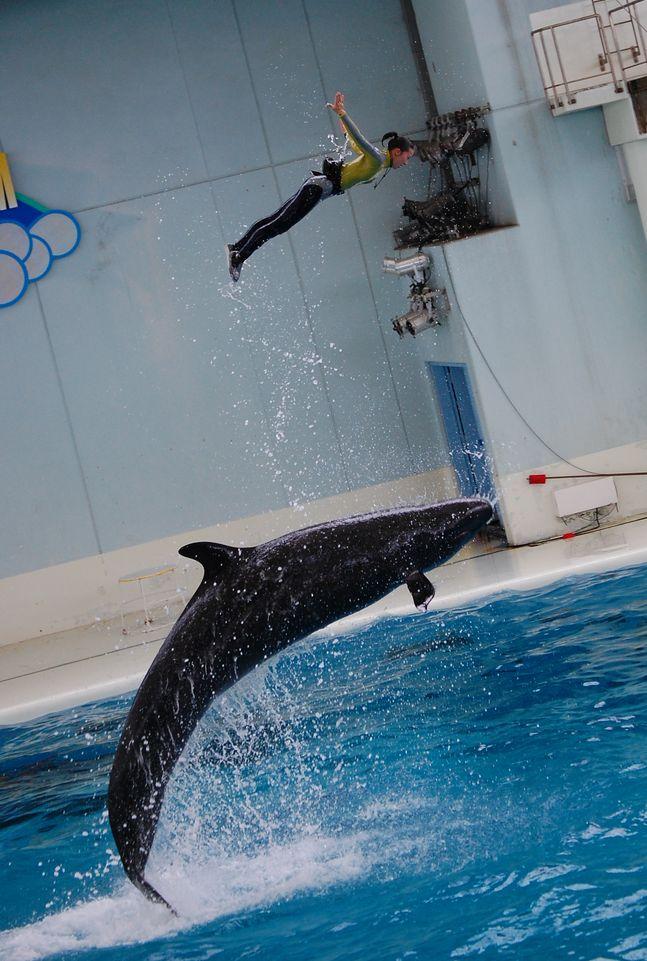 海の動物たちのショー(イルカとトレーナー)