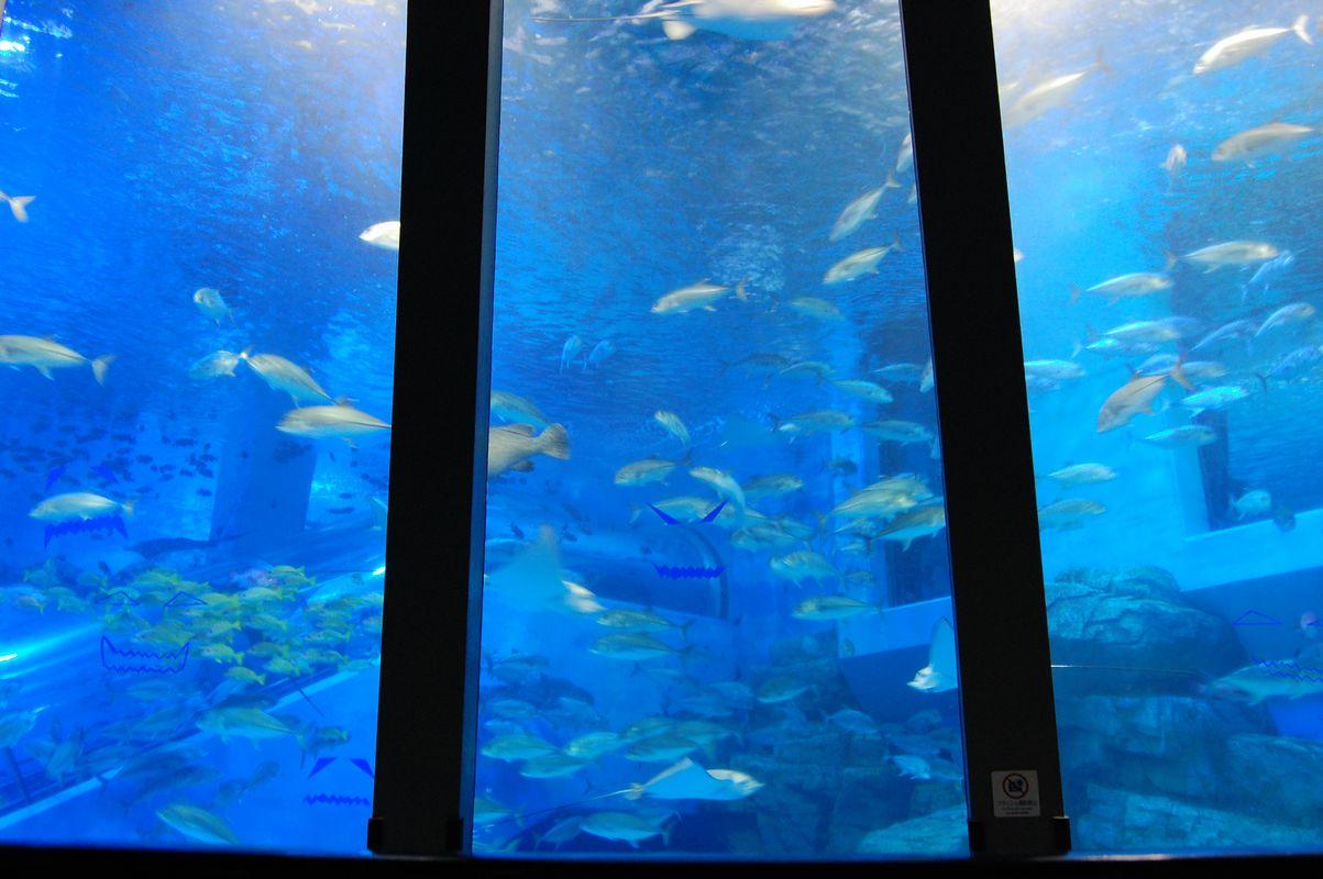 パノラマ・海洋の魚たち