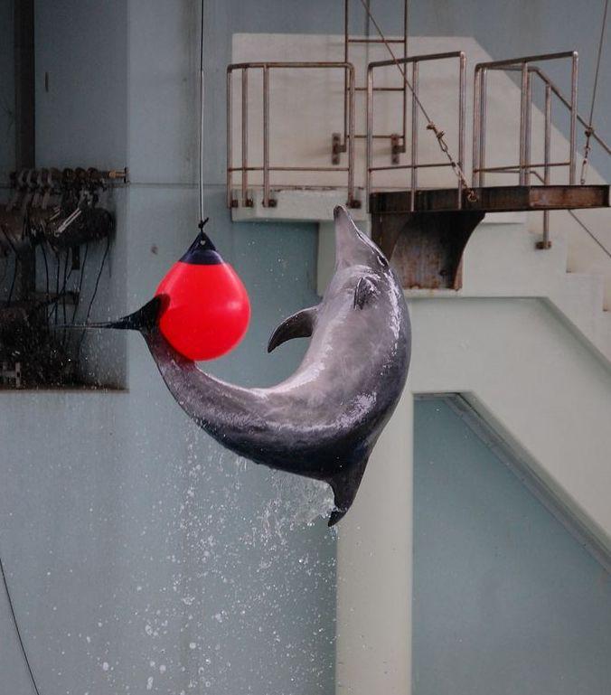 海と動物たちのショー(イルカ)