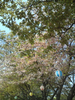 ほとんど葉桜