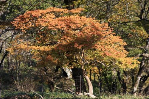 色付きかけの木