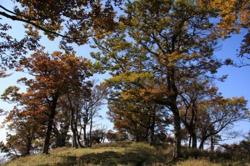 蛭ヶ岳への道