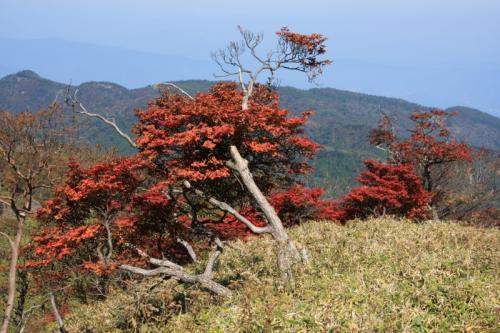 蛭ヶ岳へ向かう道で見た紅葉
