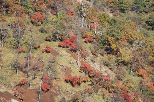 斜面で見た紅葉