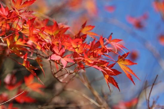 戸川公園の紅葉