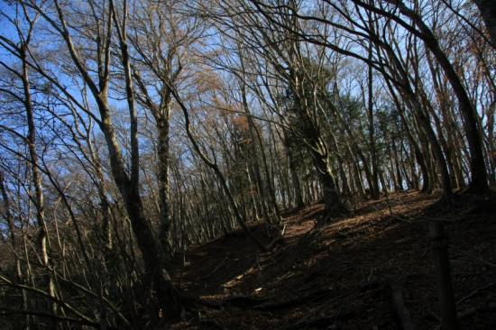ブナ林の道