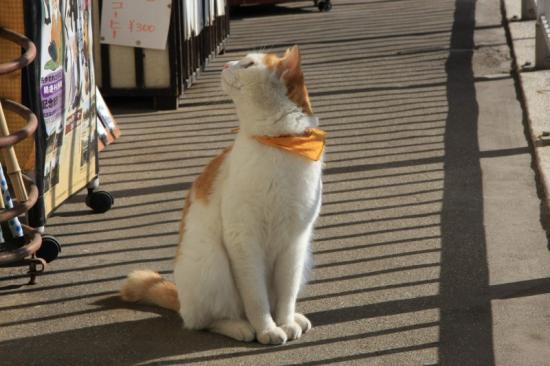 江ノ島のネコ