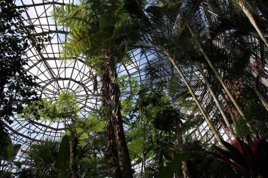 大温室トロピカルドーム