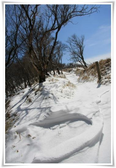表尾根の雪