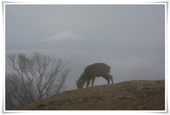 富士山と鹿