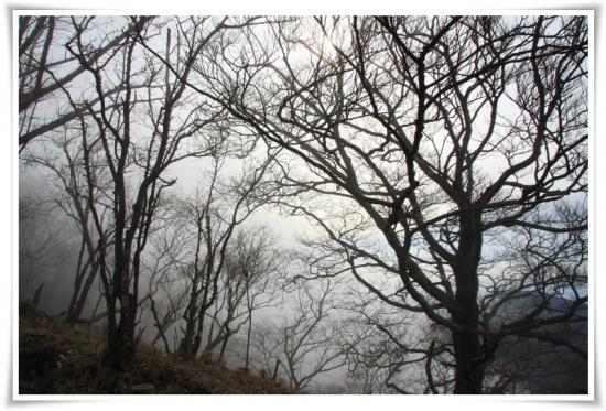 霧に包まれた搭ノ岳へ。。