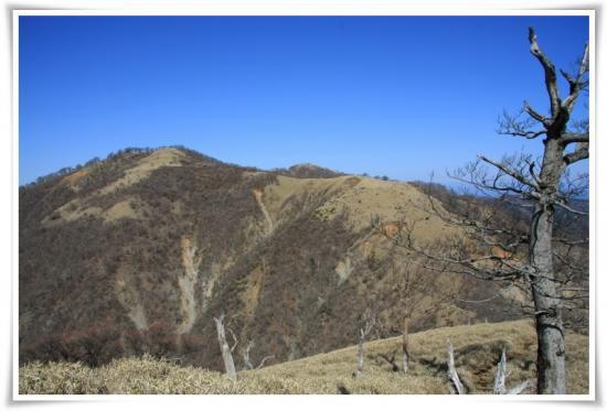 蛭ヶ岳へ向かう登山道